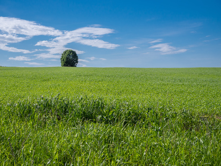 Green field and blue sky with tree on the horizon