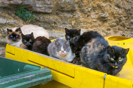 a lot of homeless cats in a garbage in the European city