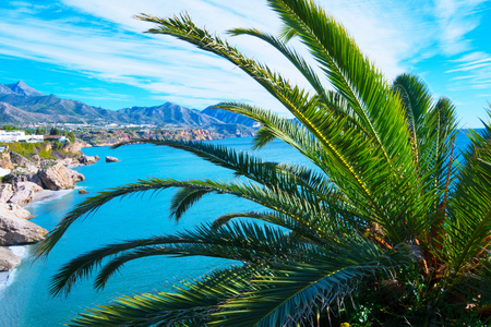 Tropical beach with palm trees near blue sea. Exotic summer vacation. Good weather