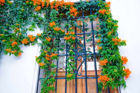 Building with traditional window decorated with fresh orange flowers. Spain, Nerja 版權商用圖片