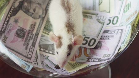 Funny a rat with a lot of money, but without freedom.