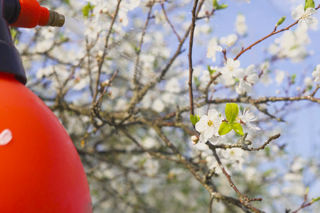 gardener with spraying a blooming fruit tree against plant diseases and pests. Use hand sprayer with pesticides in the garden. Banco de Imagens