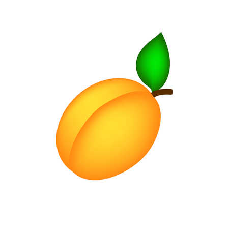 Simple apricot on white background isolate 向量圖像