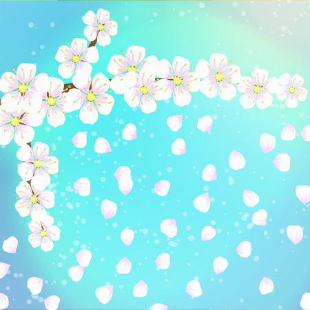 time lapse: spring background of flowers of apricot with the falling petals