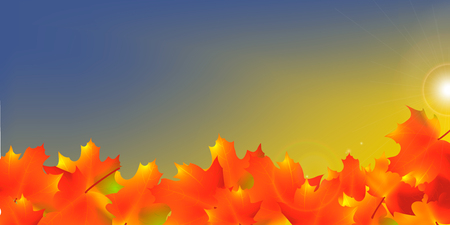 Autumn Frame With Falling Maple Leaves on Sky Background.