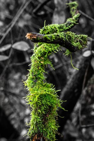 stick and branch with green moss in the forest