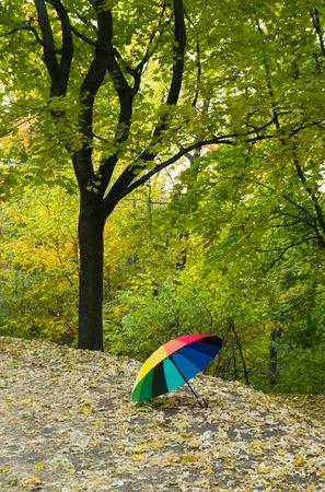 rainbow umbrella: Rainbow umbrella in the autumn park Stock Photo