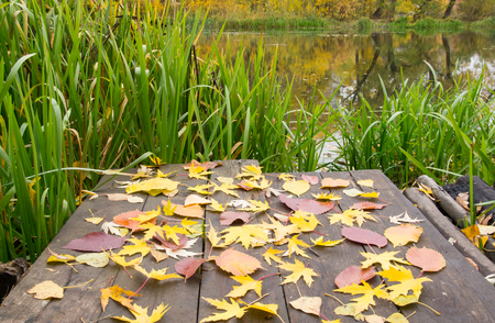 backwater: Bridge with a lot of yellow leaves on the pond
