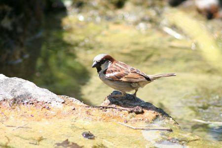 bird in the Botanical Garden Фото со стока