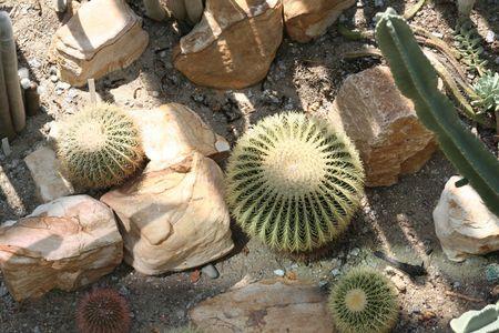 Cactus Фото со стока