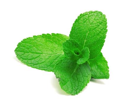 Grüne Minze Lizenzfreie Bilder