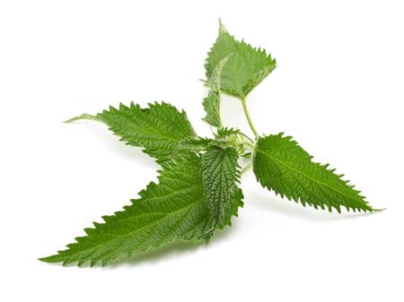Green Nettle Stock Photo