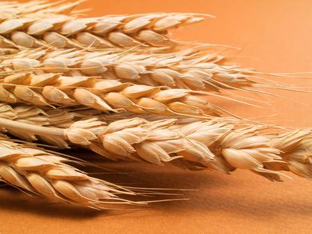 close up food: Wheat close up - raw food