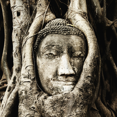 statue: Buddha figure overgrown by fig roots in Wat Mahatat in Ayutthaya historic park, Thailand. Only the head has remained. This ancient temple was built during the 14th century. Stock Photo
