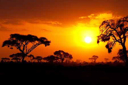 the national flag of kenya: Típico atardecer africano con acacias en Masai Mara, Kenia