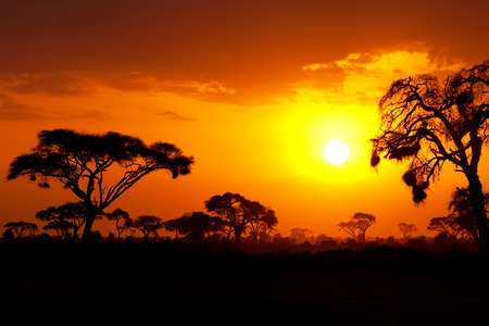 Typical african sunset with acacia trees in Masai Mara, Kenya Stock fotó - 36191724