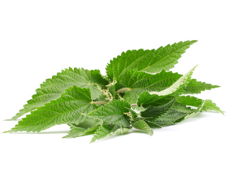 clr: Green Nettle isolated in white