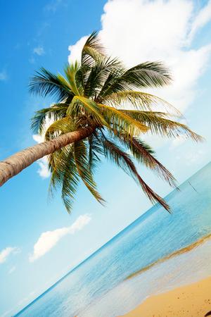 'koh samui': Koh Samui beach with palm trees and white sand
