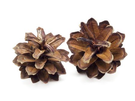 Pine cone: c�ne de pin, isol� sur blanc, l'ombre ne sont pas retir�s