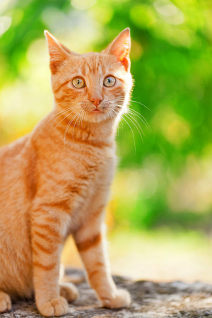 domestic: Domestic cat outdoors Stock Photo