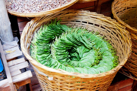 euphoria: Betel Nut leaves. Betel leaves are used to wrap areca nuts, lime and tobacco. The gum sized bundle is chewed to produce a sense of wellbeing and euphoria. In small quantities it produces a response similar to caffeine, while in large doses the effect is m Stock Photo