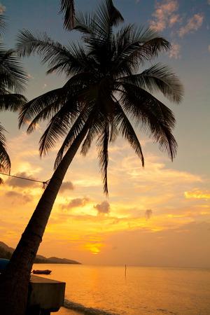 koh samui: Koh Samui beach with palm trees at sunset