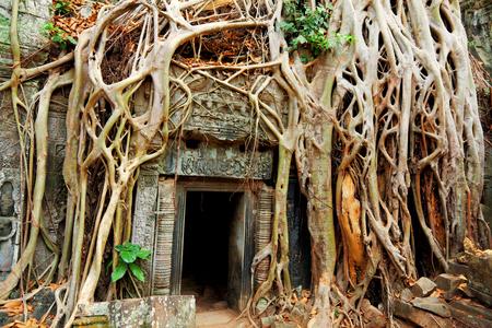 sien: Ta Prohm templo cubierto de ra�ces de �rboles, Angkor Wat, Camboya Foto de archivo