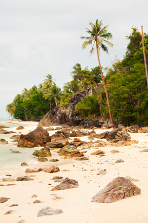 koh samui: Koh Samui beach with palm trees and white sand
