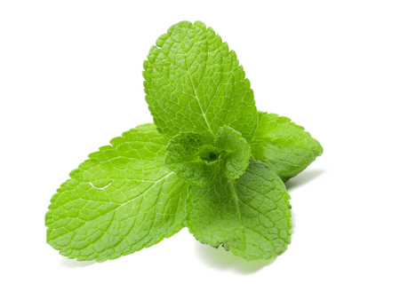 Green Mint Stock Photo