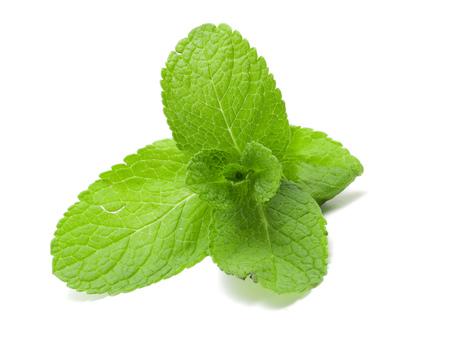 Green Mint Banque d'images