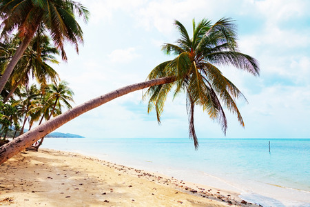 Palm trees on a beach in Koh Samui island in Thailand. Sand on foreground Stock Photo