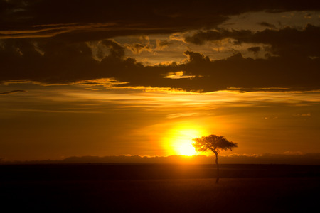 masai mara: Typical african sunset with acacia trees in Masai Mara, Kenya. Horizontal shot