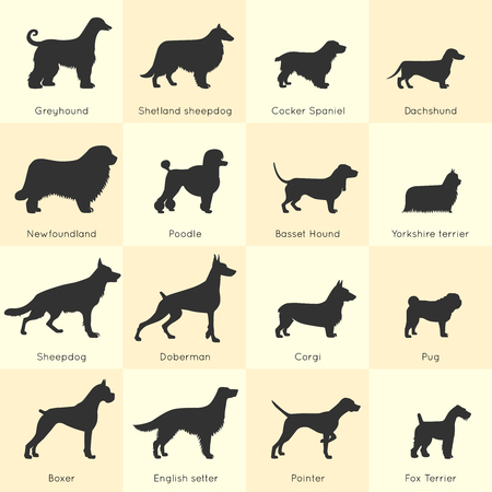 appearance: Silhouettes of different dogs breeds icon set with detailed description of appearance and character vector illustration