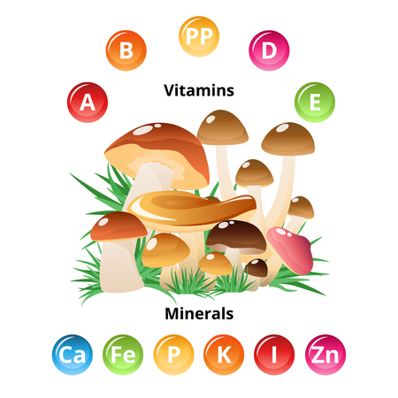 fungi: Vitamins and minerals contained in mushrooms infographics with colorful circle symbols and wild nature cartoon vector illustration
