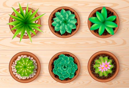top view plant: Colored isolated top view plant icon set with green flowers on wooden table illustration
