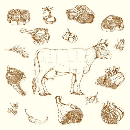 Meat hand drawn elements set with cow and parts of beef herbs and vegetables isolated illustration Illustration