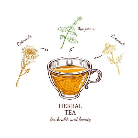 valuable: Herbal tea recipe concept valuable for health with calendula marjoram and camomile ingredients isolated vector illustration