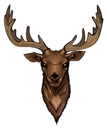 horny: Wild Deer Head Portrait Illustration