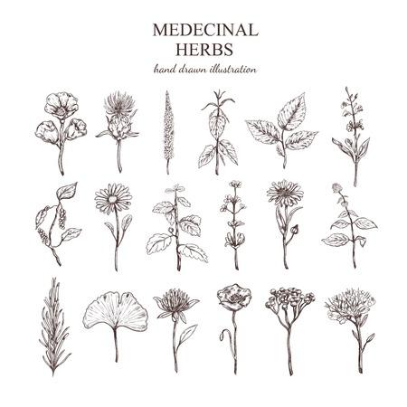 Hand Drawn Medizinische Kräuter Sammlung