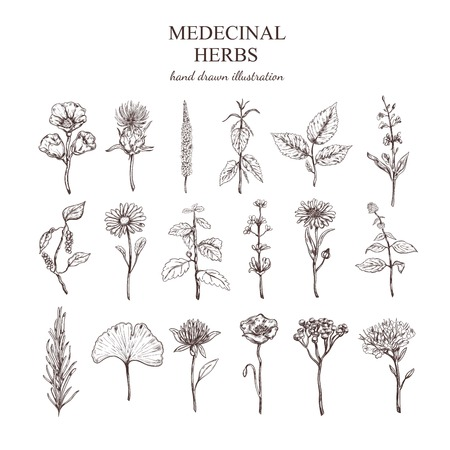 Hand Drawn Medical Herbs Collection Illustration