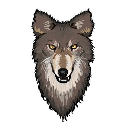 terrified: Gray Wolf Head