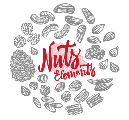 Sketch Nuts Elements Round Composition Imagens - 78716554