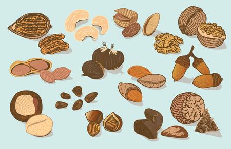 カラフルな自然有機ナッツ コレクション