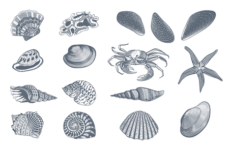 Sketch ocean nature set with crab scallop snail starfish and seashells of different shapes