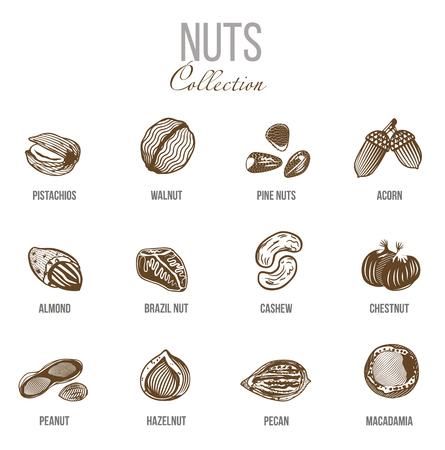 ホワイト バック グラウンド分離ベクトル イラスト上のナッツの種類で設定有機食品をスケッチします。