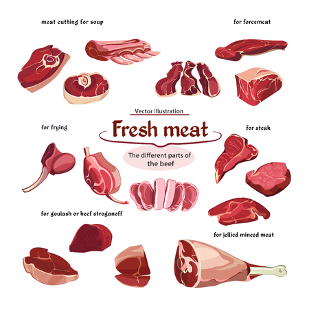 Sketch Cutting Beef Meat Parts Collection