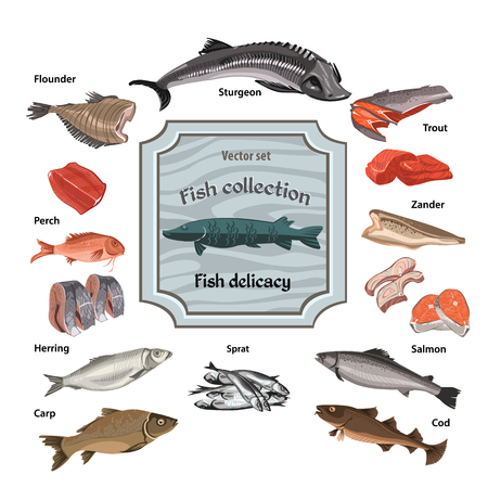 Hand drawn colored seafood collection with whole and parts fishes of different kinds isolated vector illustration Illustration