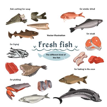 Colored Sketch Seafood Set Illustration