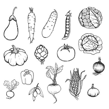 Handgetekende Verse Biologische Groenten Set