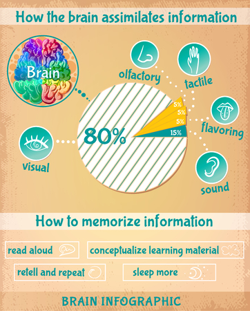 Cartoon Human Brain Infographics